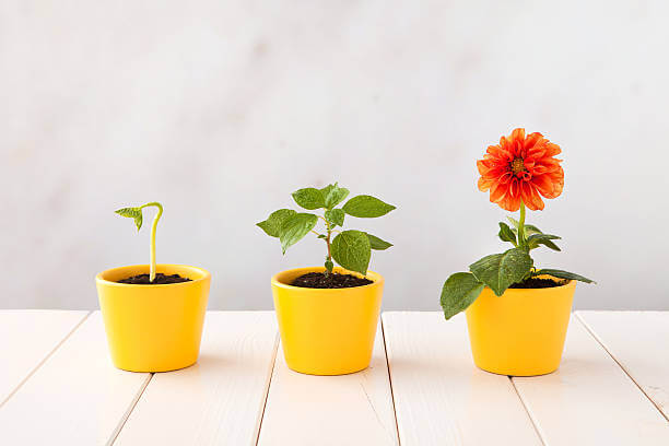 3 Quick Ways to Grow Your Company