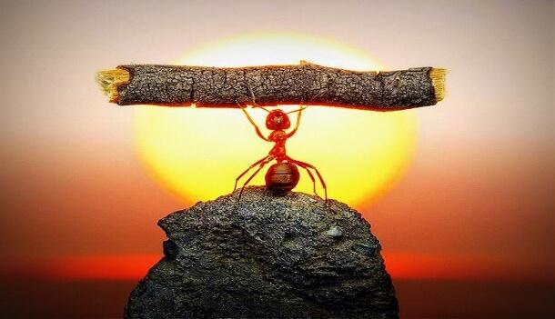 ant-lifting-a-twig-610x351